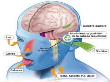 sistema-vestibular-9-638